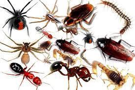 تفسير حلم رؤية الحشرات في المنام بالتفصيل